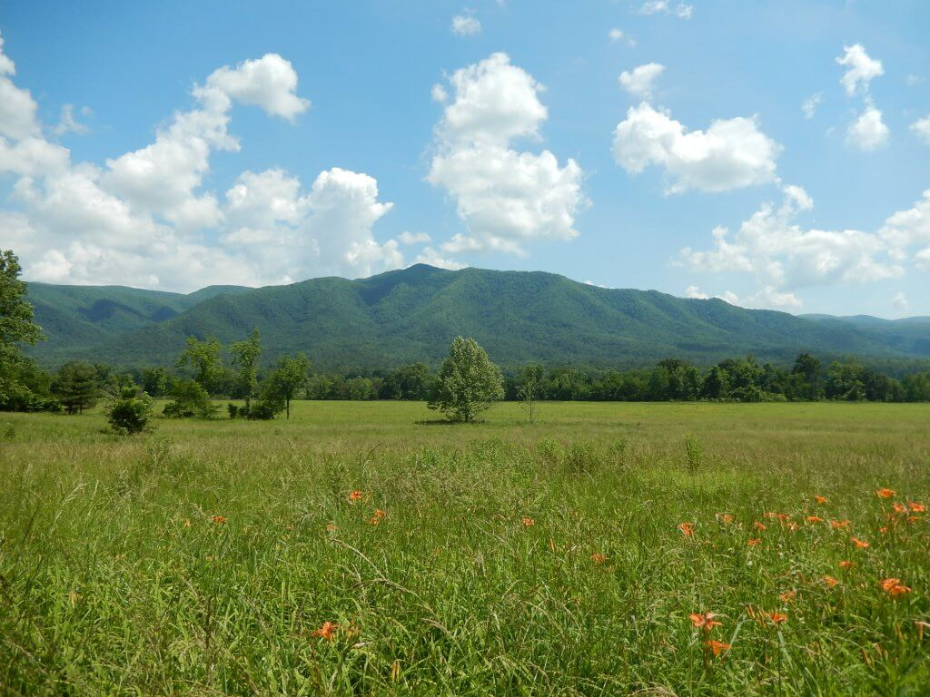 Wide open field on a sunny day at Cades Cove in Great Smoky Mountains National Park