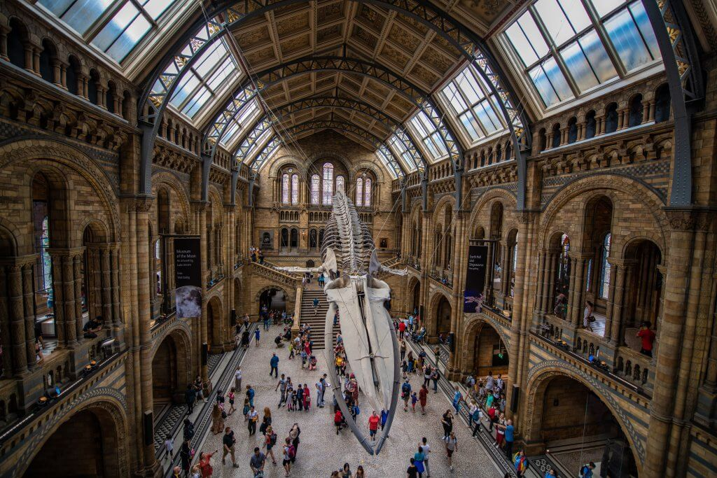 interior of the London Natural History museum