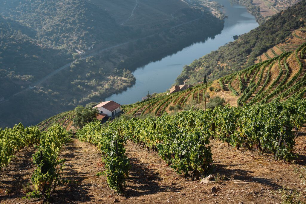 Vineyard on a cliff overlooking a river in Douro, Portugal