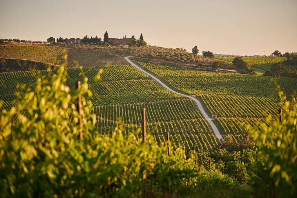 the rolling hills of a vineyard in tuscany with leaves in the foreground